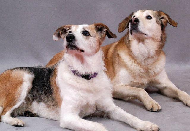 5-offerte-sull-assicurazione-per-il-tuo-cane